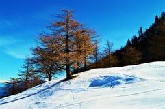 Winter in der Schweiz stockfotos