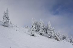 Winter descending landscape with fir trees covered in snow Royalty Free Stock Photography