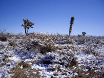 Winter in the desert Royalty Free Stock Photo