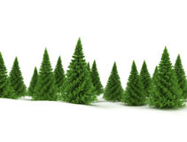 Winter design background - pine trees Royalty Free Stock Photography