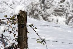 Winter detail Stock Photography
