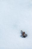 Winter detail. Detail of a plant surrounded by snow Royalty Free Stock Photo