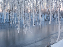 Winter detail Royalty Free Stock Images