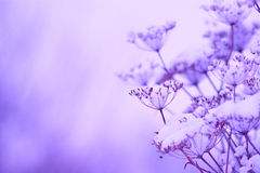 Winter Detail Royalty Free Stock Photo
