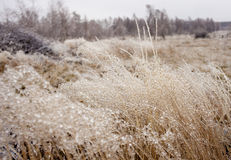 Winter Detail. Plants covered in ice and snow. Winter landscape Stock Image