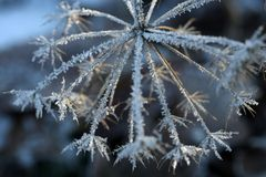 Winter details Royalty Free Stock Photography