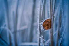Winter details, frosty leaf. Leaf stucked, cold afternoon, frost everywhere Stock Photo