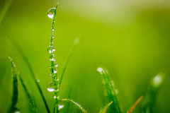 Winter Dew on a Blade of Grass Stock Photos