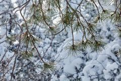 Winter die fairytale voor de schoonheid van de sneeuwstormaard de zorgen Royalty-vrije Stock Foto's