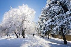 Winter Die Sonne Ein Mann geht entlang den Weg des Parks unter die Bäume im Schnee Stockfotografie