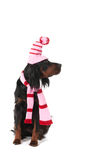 Winter dog Royalty Free Stock Photo