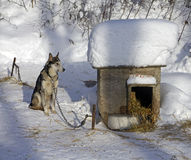 Winter dog Stock Photography