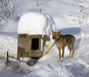 Winter dog Royalty Free Stock Images