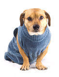 Winter dog Stock Image