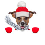 Winter dog Royalty Free Stock Photos