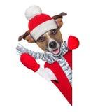 Winter dog Stock Photo