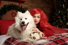 Winter dog holiday and Christmas. A girl in a knitted sweater and with red hair with a pet in the studio. Christmas. Woman with a beautiful face and pet. New stock images