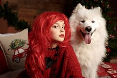Winter dog holiday and Christmas. A girl in a knitted sweater and with red hair with a pet in the studio. Christmas. Woman with a beautiful face and pet. New stock photography