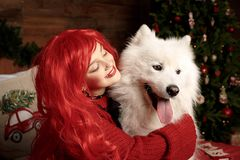 Winter dog holiday and Christmas. A girl in a knitted sweater and with red hair with a pet in the studio. Christmas. Woman with a beautiful face and pet. New stock image