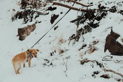 Winter dog in the mountains stock images