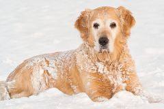 Winter dog portrait Royalty Free Stock Photos