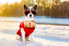 Winter dog Royalty Free Stock Photography