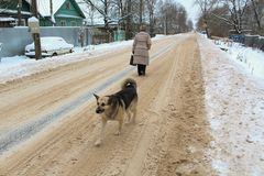 Winter dog road woman stock image