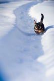 Winter dog run. In snow stock photography