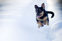 Winter dog run. In snow stock photography