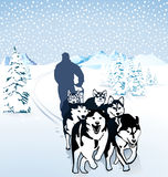 Winter dog sledding. Team of husky dogs pulling a sledge in a snowy winter wonderland with a mountain backdrop Royalty Free Stock Image
