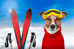 Winter dog snow. Winter dog ski snow sky Stock Images