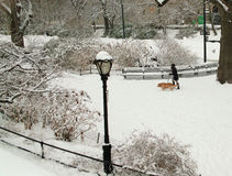 Winter Dog Walk, Winter, NYC USA Royalty Free Stock Photo