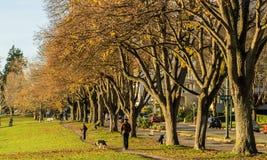 Winter dog walk Stock Photo