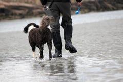 Winter Dog Walk on the Beach Royalty Free Stock Photography