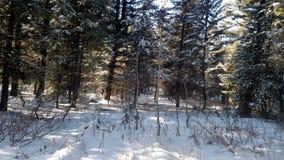 Winter draußen in meinem Leben Stockbilder