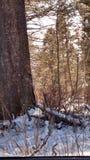 Winter draußen in meinem Leben Lizenzfreie Stockfotografie