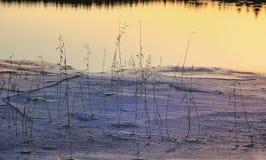 Winter draußen See-Eis deckt Reflexion mit Schilf stockfotografie