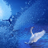 Winter dream. Blue frostwork background and swan Royalty Free Stock Photography