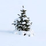 Winter dream of a fur-tree. The young fur-tree as if has fallen asleep on a slope, covered by a snow cover Royalty Free Stock Photo
