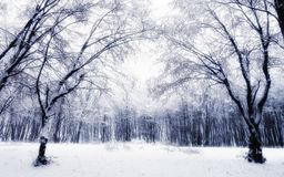 Winter dream Stock Photography