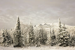 Winter dream. Somewhere in Gornaya Shoriya of Siberia. Winter. Snow trees sleep Stock Photography