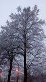 Winter drei sehr nett Lizenzfreie Stockfotos