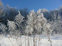 Winter dry grass and scrub, bushes and trees covered with hoarfrost, ice and layers of snow Royalty Free Stock Photo