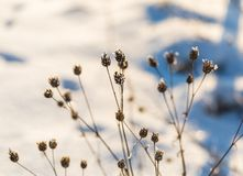 Winter dry plants with rime close up Royalty Free Stock Photo