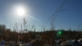 Winter dry silhouette grass in the snow field landscape snow nature royalty free stock photos