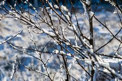 Winter dry vegetation tree branches and leaves frosty covered with snow. And ice stock photography