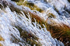 Winter dry vegetation tree branches and leaves frosty covered with snow. And ice stock photos