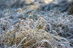 Winter dry vegetation tree branches and leaves frosty covered with snow. And ice stock images