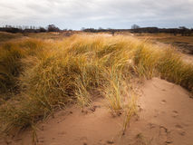 Winter dune landscape Royalty Free Stock Photography