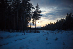 Winter dusk. In the forest Royalty Free Stock Image
